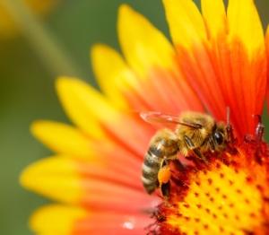 Honey Making Money